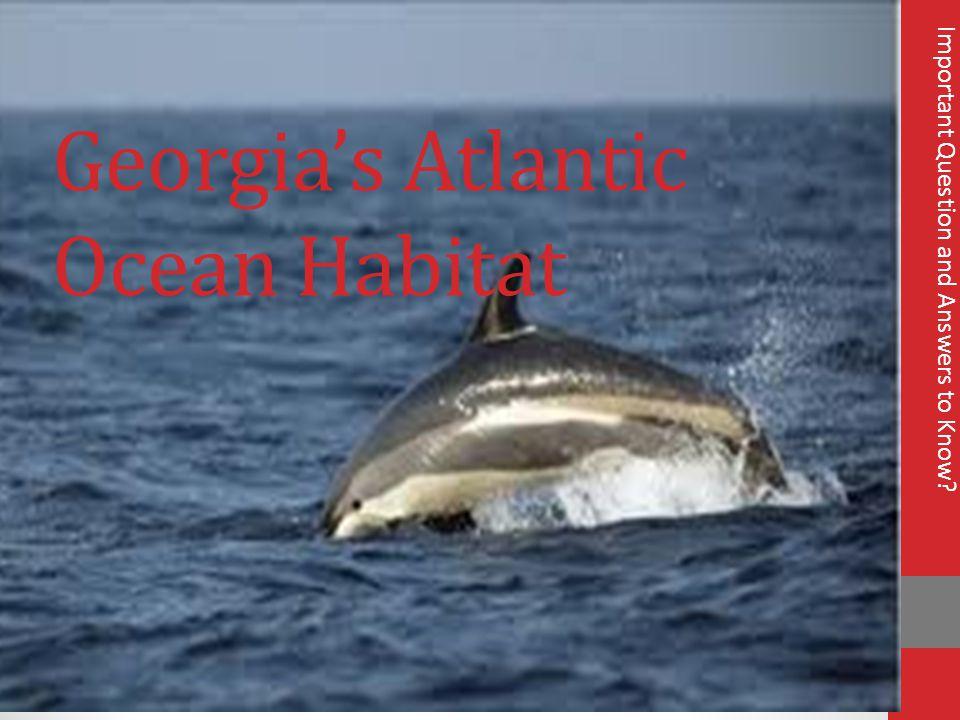 Georgia's Atlantic Ocean Habitat