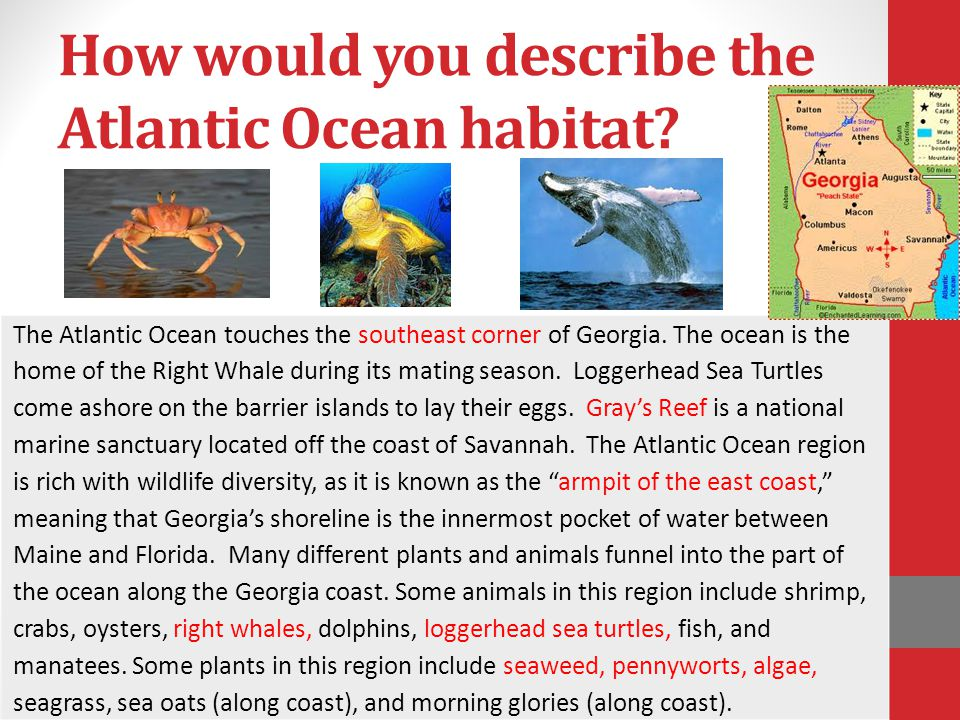 How would you describe the Atlantic Ocean habitat