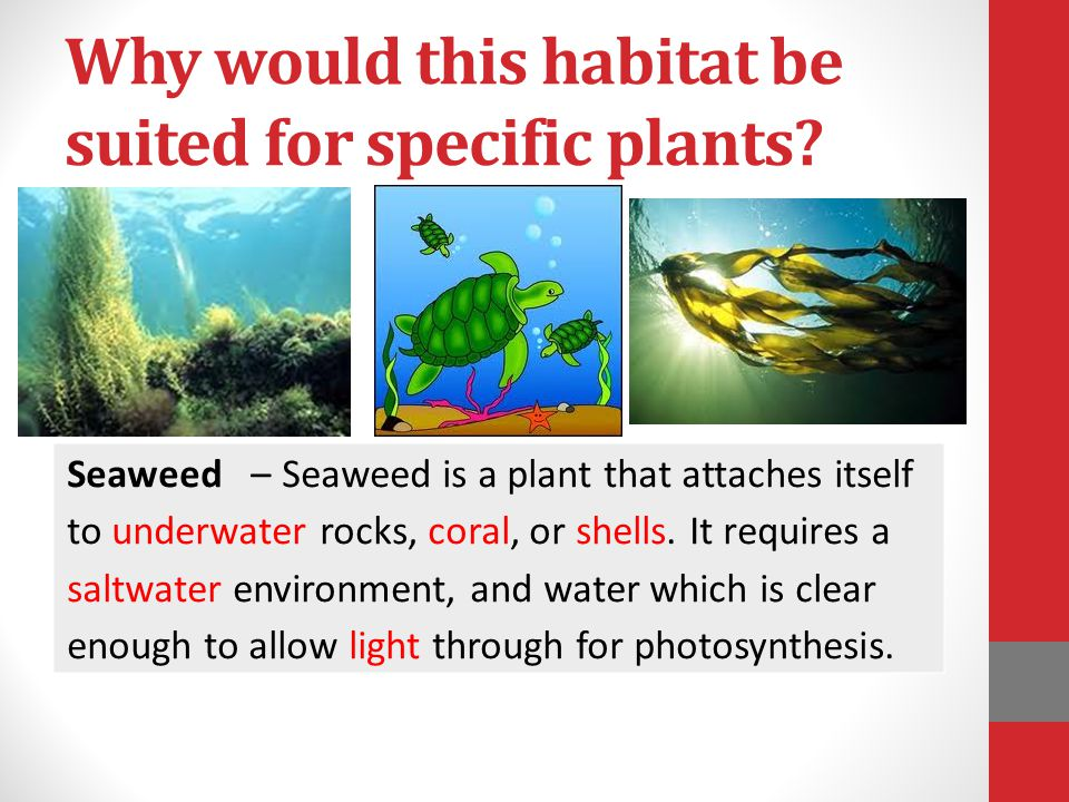 Why would this habitat be suited for specific plants