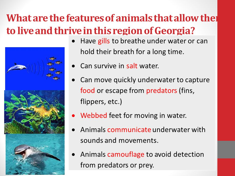 What are the features of animals that allow them to live and thrive in this region of Georgia