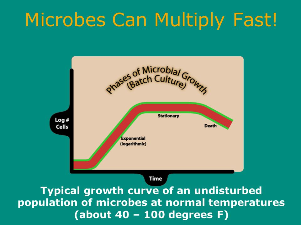 Microbes Can Multiply Fast