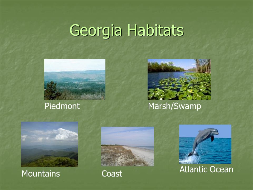 Georgia Habitats Piedmont Marsh/Swamp Atlantic Ocean Mountains Coast