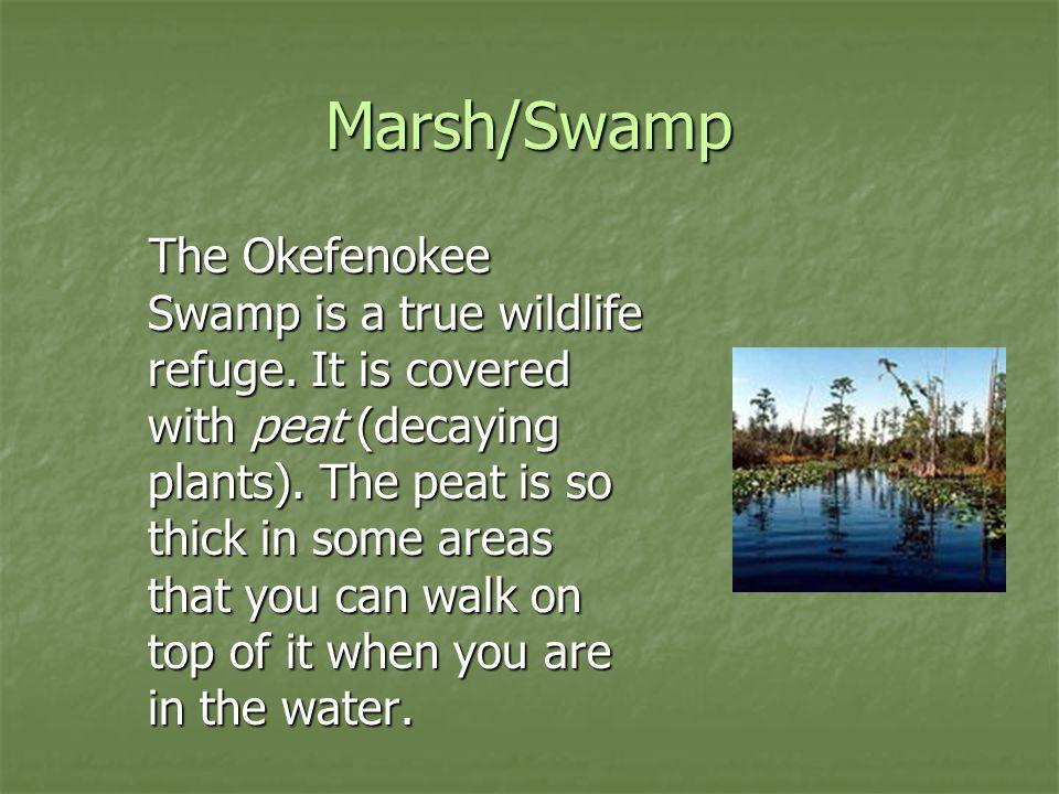 Marsh/Swamp