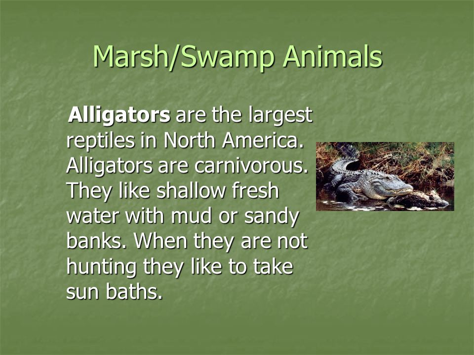 Marsh/Swamp Animals