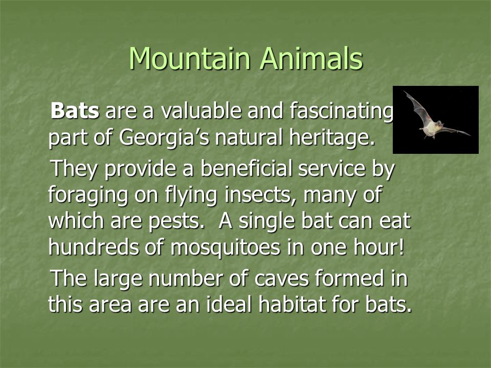Mountain Animals Bats are a valuable and fascinating part of Georgia's natural heritage.