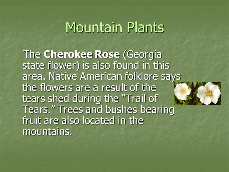Mountain Plants