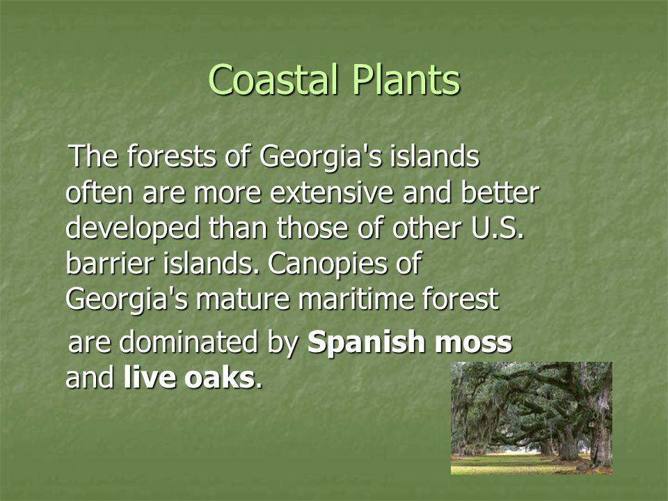 Coastal Plants