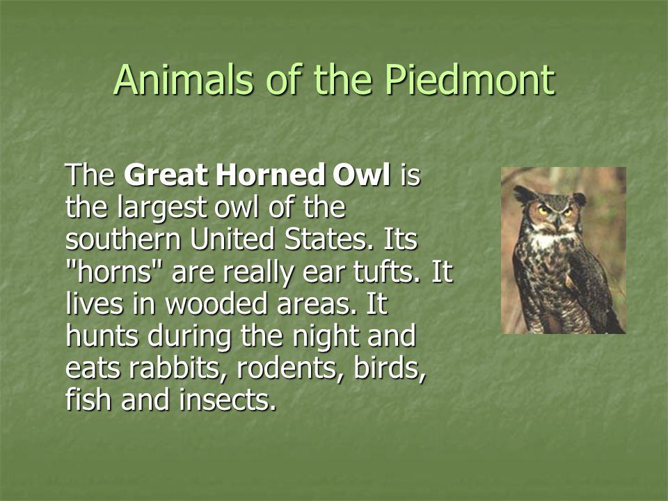Animals of the Piedmont