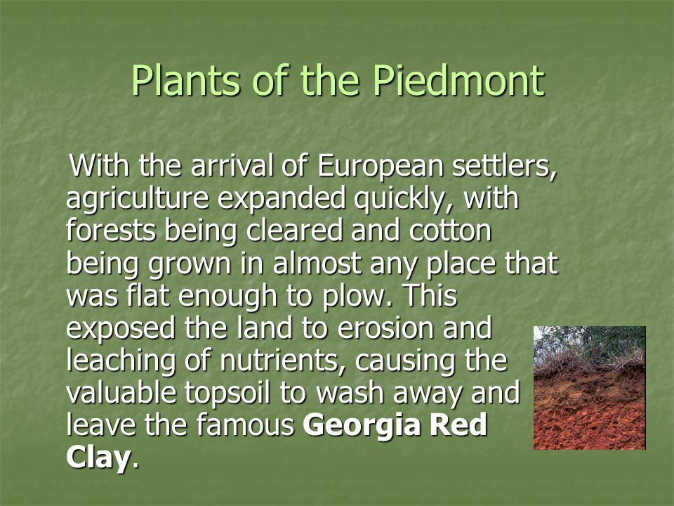 Plants of the Piedmont