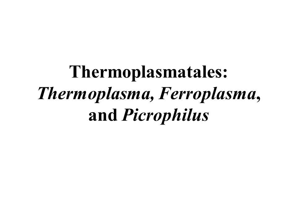 Thermoplasmatales: Thermoplasma, Ferroplasma, and Picrophilus