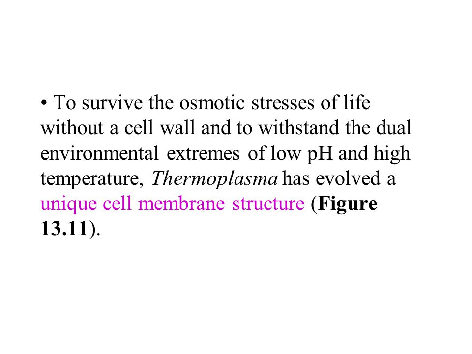 To survive the osmotic stresses of life without a cell wall and to withstand the dual environmental extremes of low pH and high temperature, Thermoplasma has evolved a unique cell membrane structure (Figure 13.11).