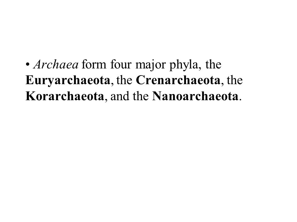 Archaea form four major phyla, the Euryarchaeota, the Crenarchaeota, the Korarchaeota, and the Nanoarchaeota.