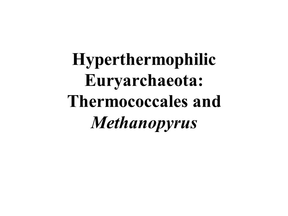 Hyperthermophilic Euryarchaeota: Thermococcales and Methanopyrus