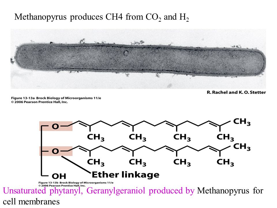 Methanopyrus produces CH4 from CO2 and H2