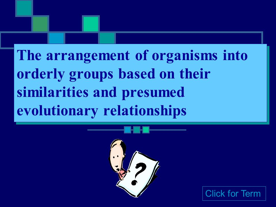 The arrangement of organisms into orderly groups based on their similarities and presumed evolutionary relationships