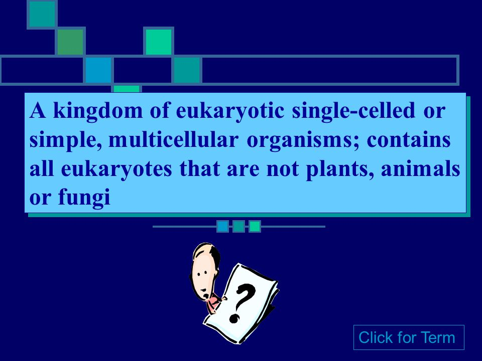 A kingdom of eukaryotic single-celled or simple, multicellular organisms; contains all eukaryotes that are not plants, animals or fungi