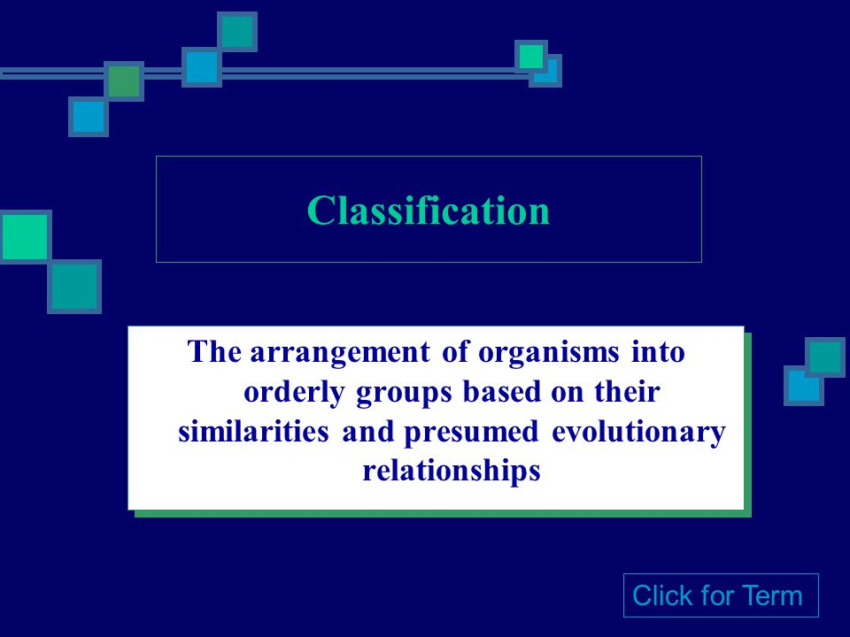 Classification The arrangement of organisms into orderly groups based on their similarities and presumed evolutionary relationships.