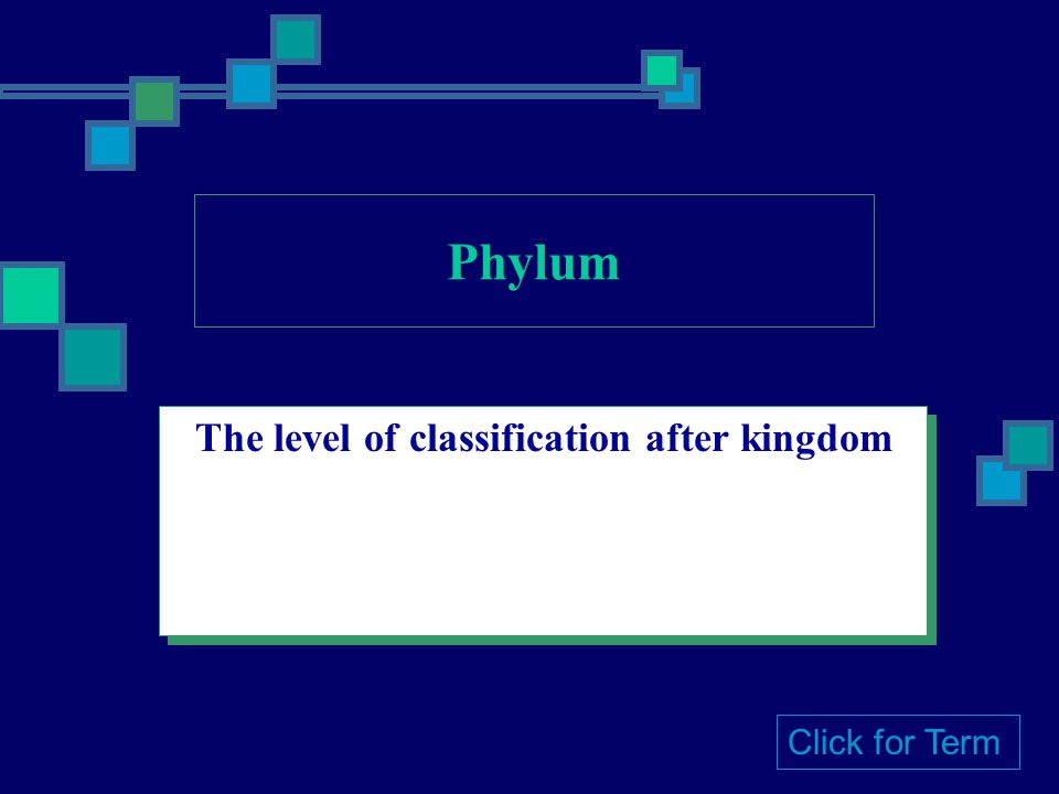 The level of classification after kingdom