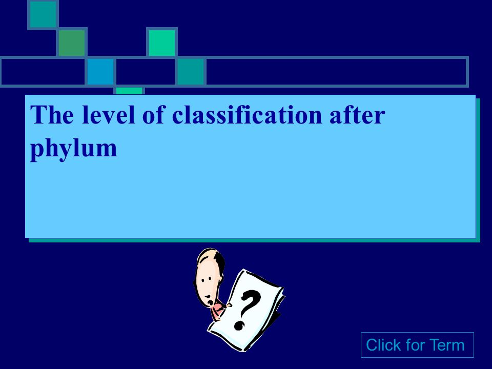 The level of classification after phylum