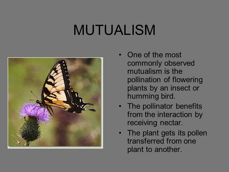 MUTUALISM One of the most commonly observed mutualism is the pollination of flowering plants by an insect or humming bird.