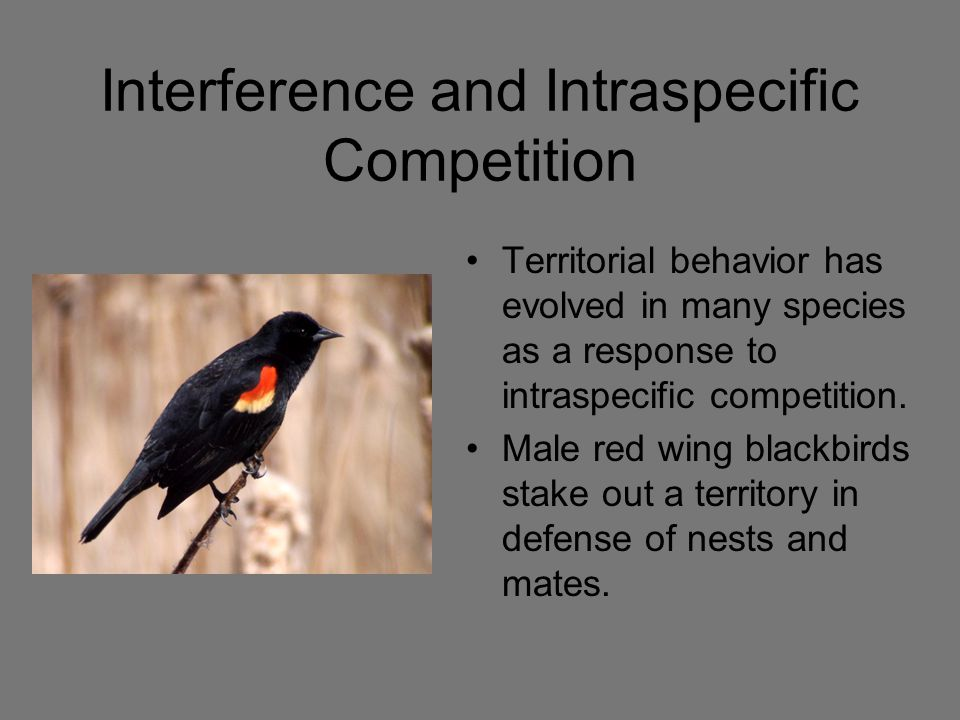 Interference and Intraspecific Competition