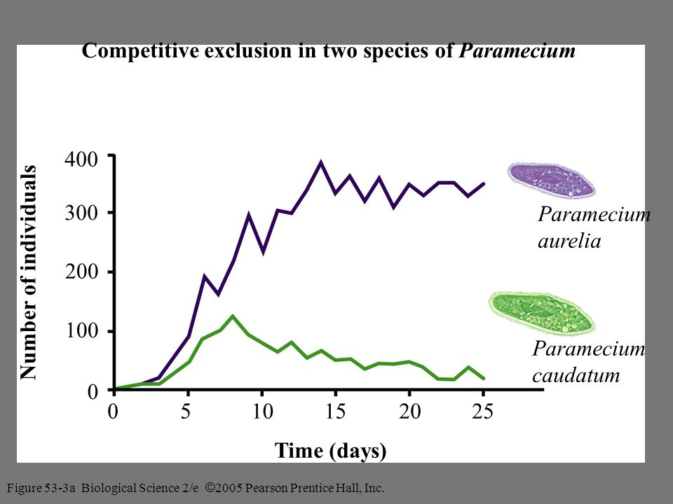 Competitive exclusion in two species of Paramecium