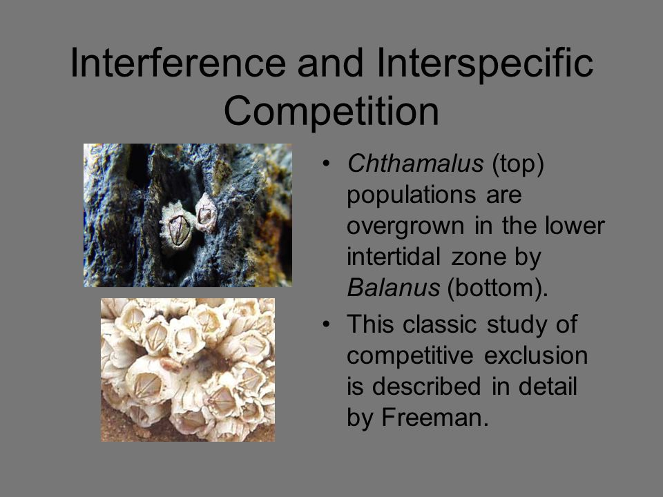 Interference and Interspecific Competition