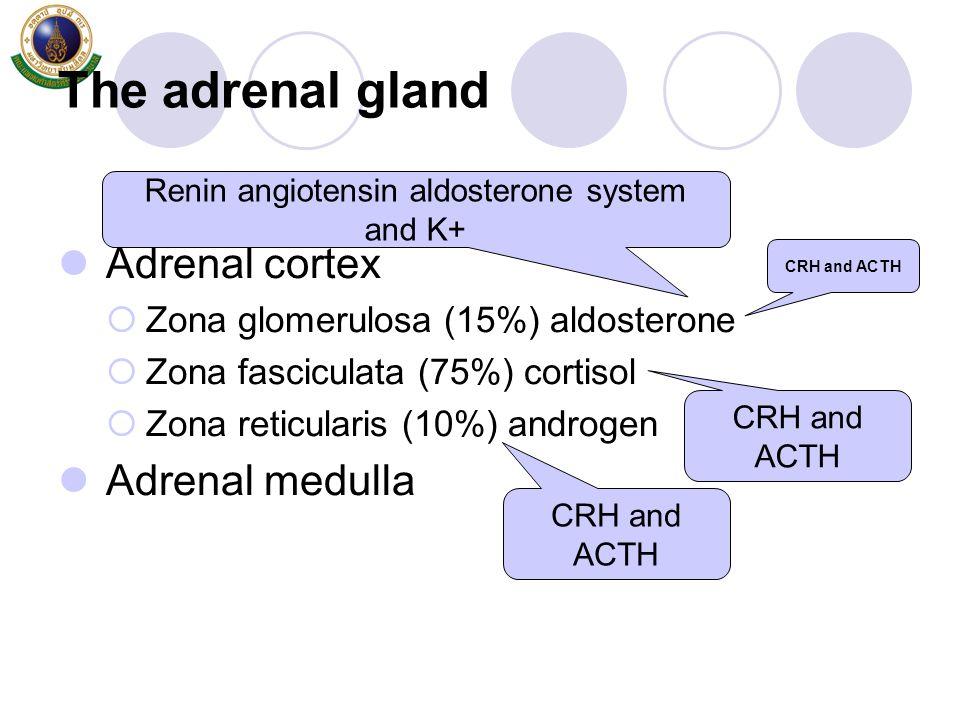 Renin angiotensin aldosterone system and K+