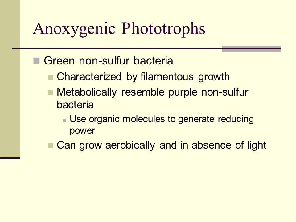Anoxygenic Phototrophs