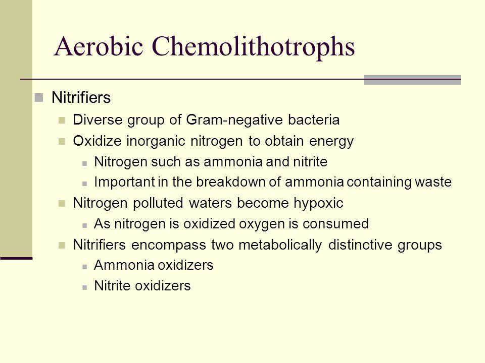 Aerobic Chemolithotrophs