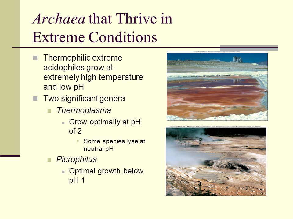 Archaea that Thrive in Extreme Conditions