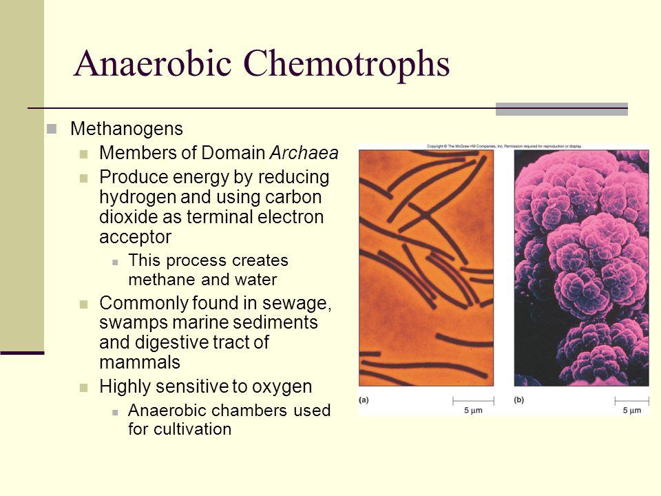 Anaerobic Chemotrophs