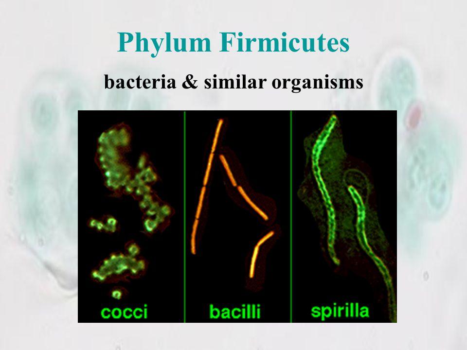 bacteria & similar organisms