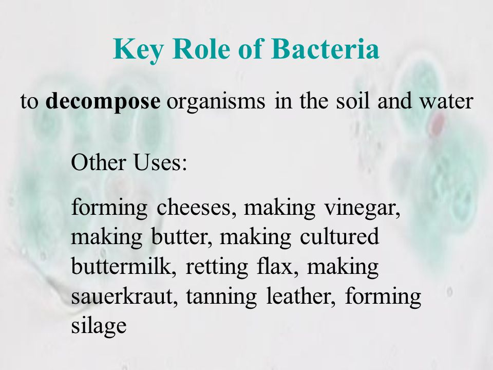 to decompose organisms in the soil and water