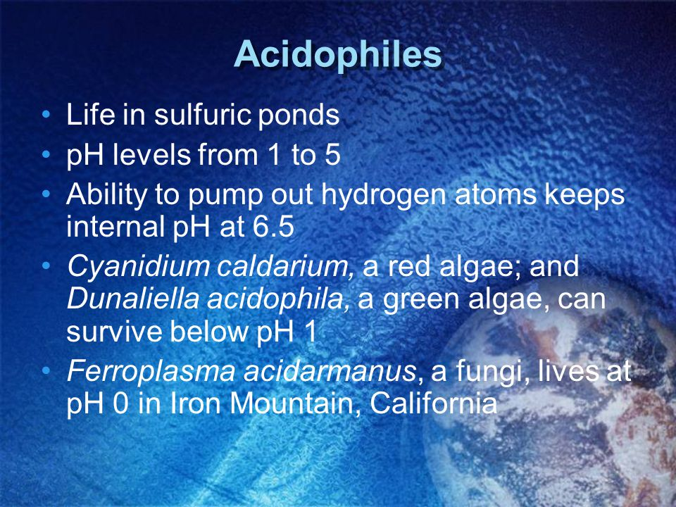 Acidophiles Life in sulfuric ponds pH levels from 1 to 5