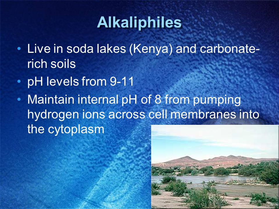 Alkaliphiles Live in soda lakes (Kenya) and carbonate-rich soils