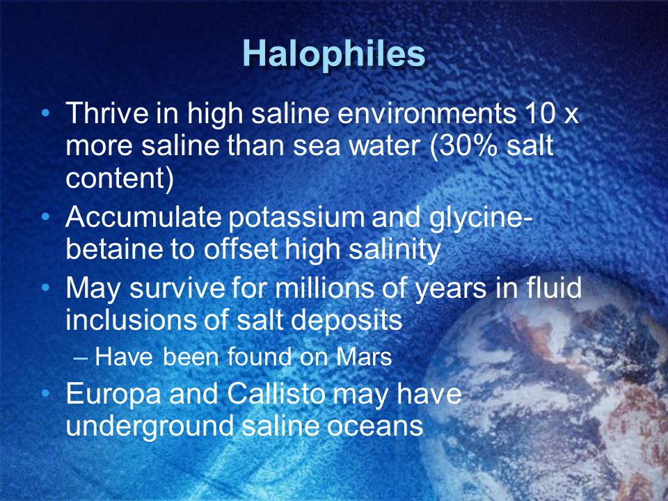 Halophiles Thrive in high saline environments 10 x more saline than sea water (30% salt content)