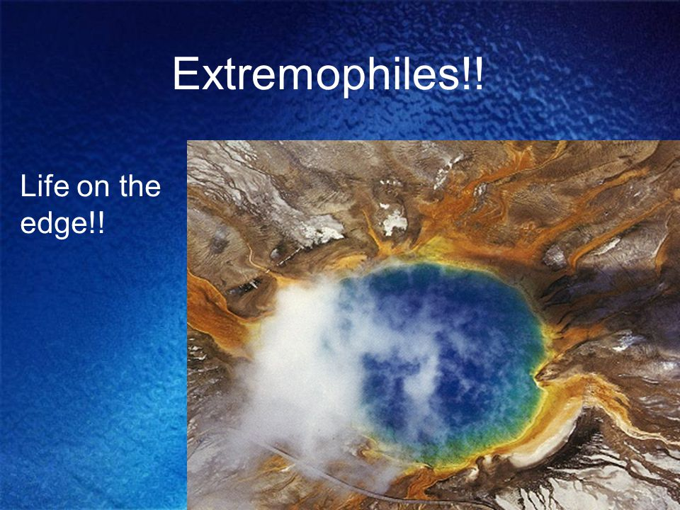 Extremophiles!! Life on the edge!!