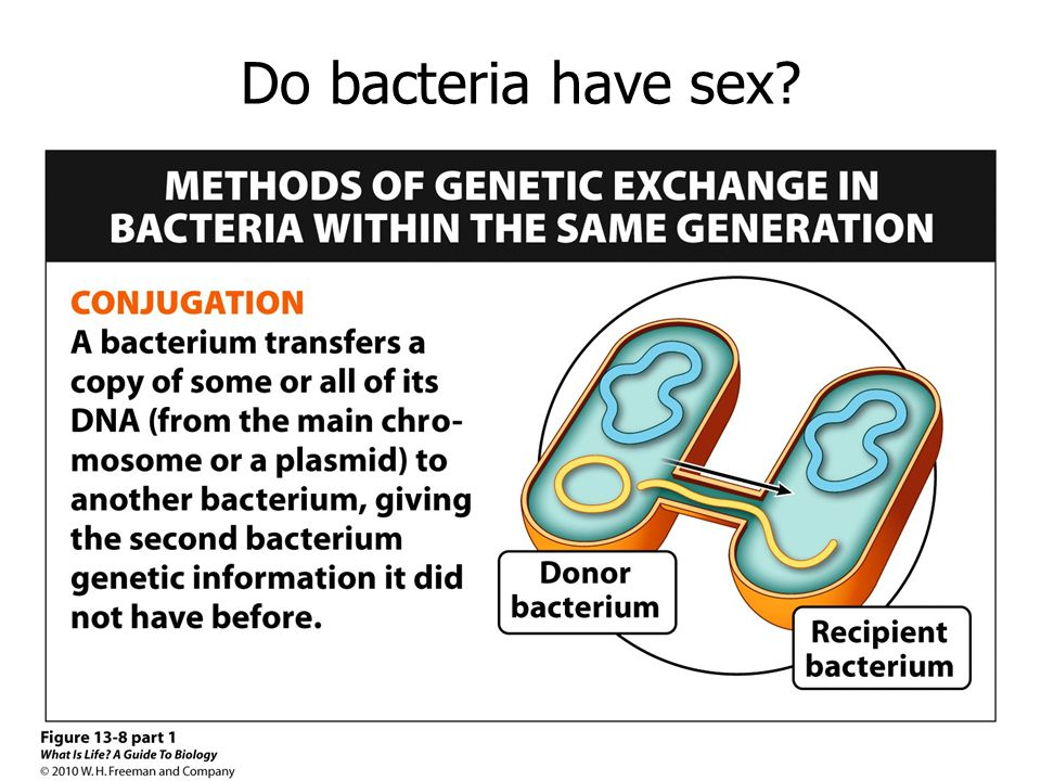 Do bacteria have sex