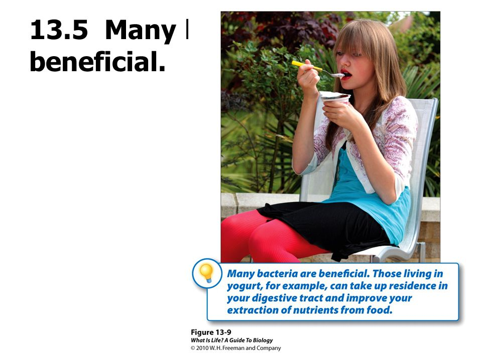 13.5 Many bacteria are beneficial.