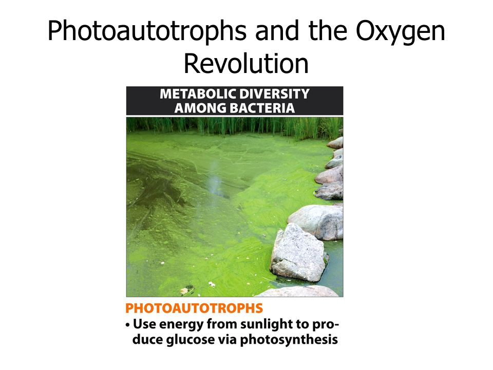 Photoautotrophs and the Oxygen Revolution