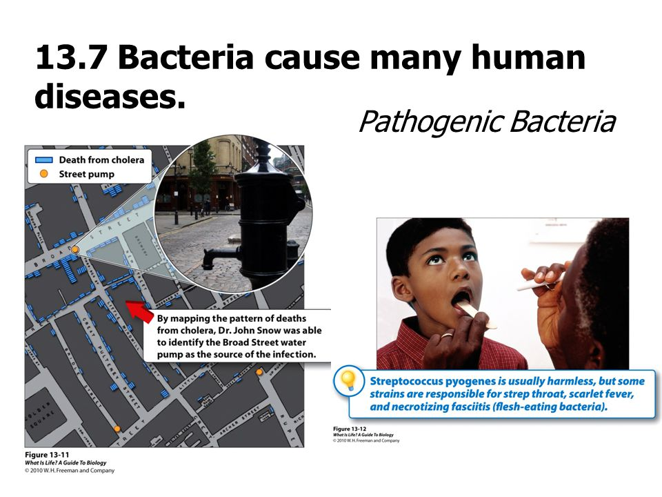 13.7 Bacteria cause many human diseases.