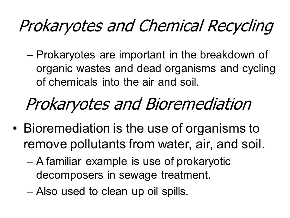 Prokaryotes and Chemical Recycling