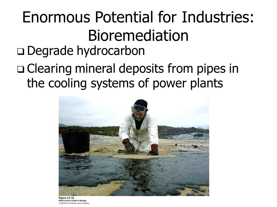 Enormous Potential for Industries: Bioremediation