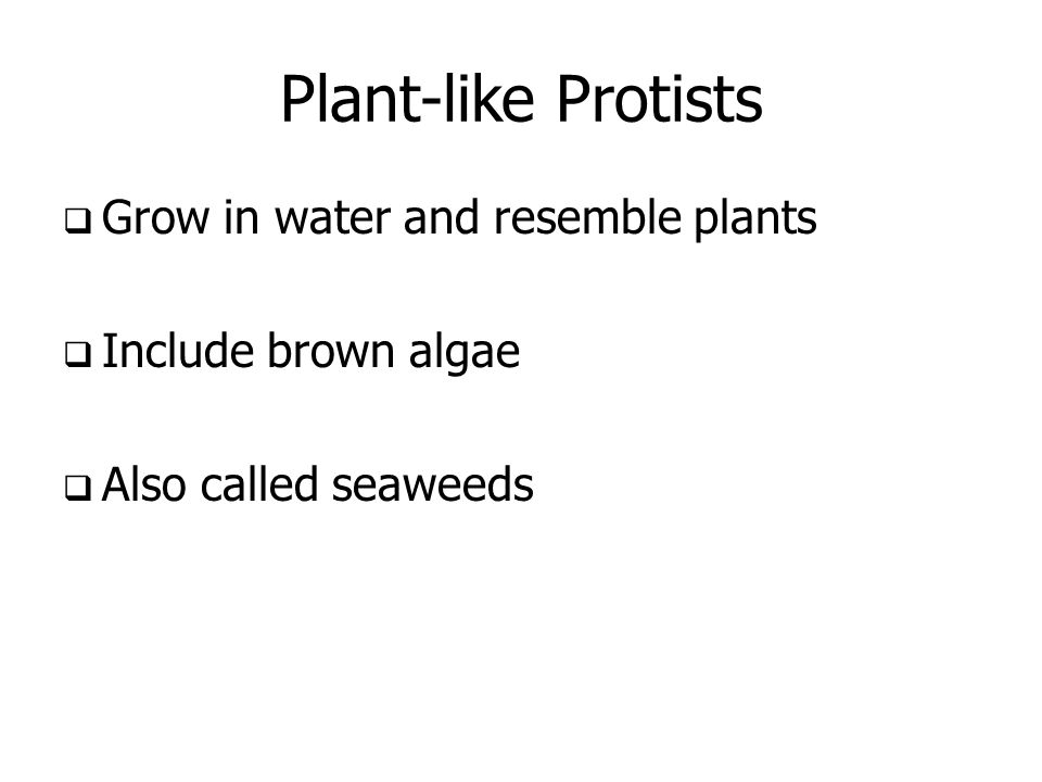 Plant-like Protists Grow in water and resemble plants