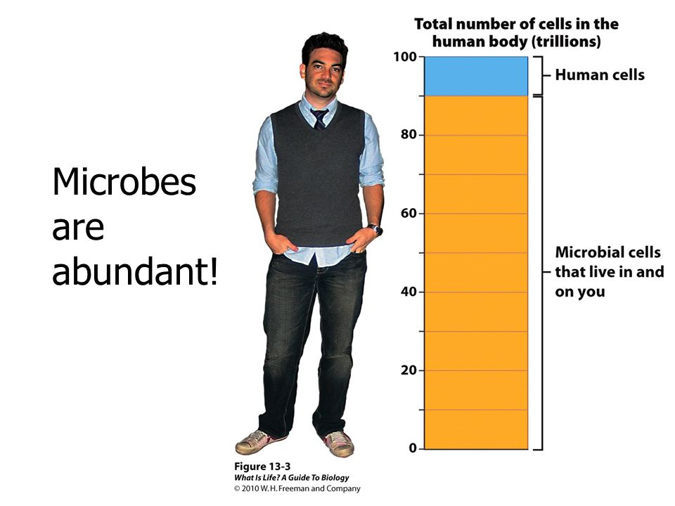 Microbes are abundant! Microbes are abundant.