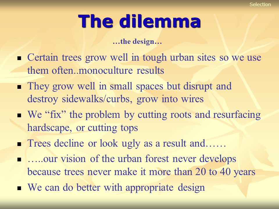 Selection The dilemma. …the design… Certain trees grow well in tough urban sites so we use them often..monoculture results.