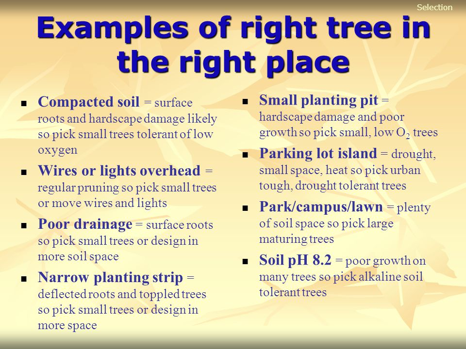 Examples of right tree in the right place