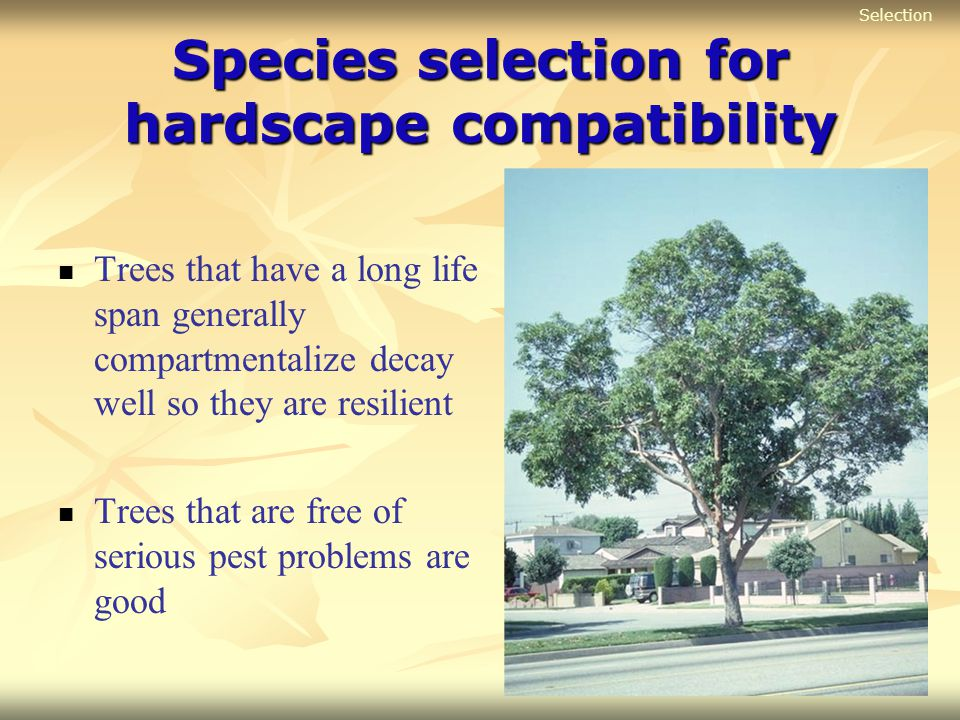 Species selection for hardscape compatibility