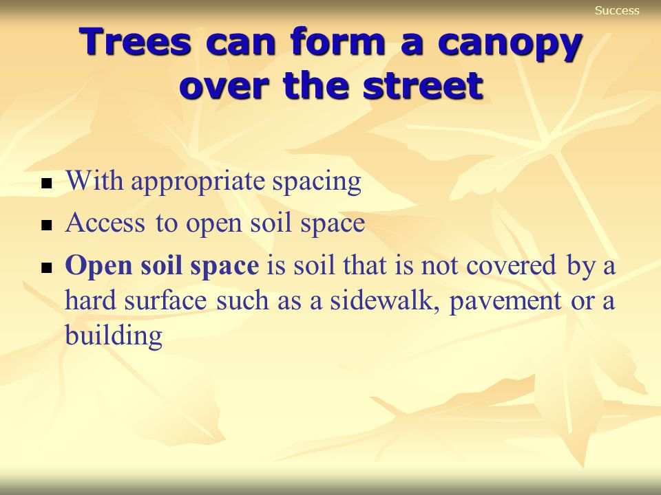 Trees can form a canopy over the street